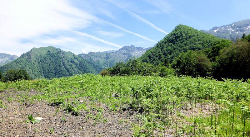 Cascade d'Ars, étang de Guzet.