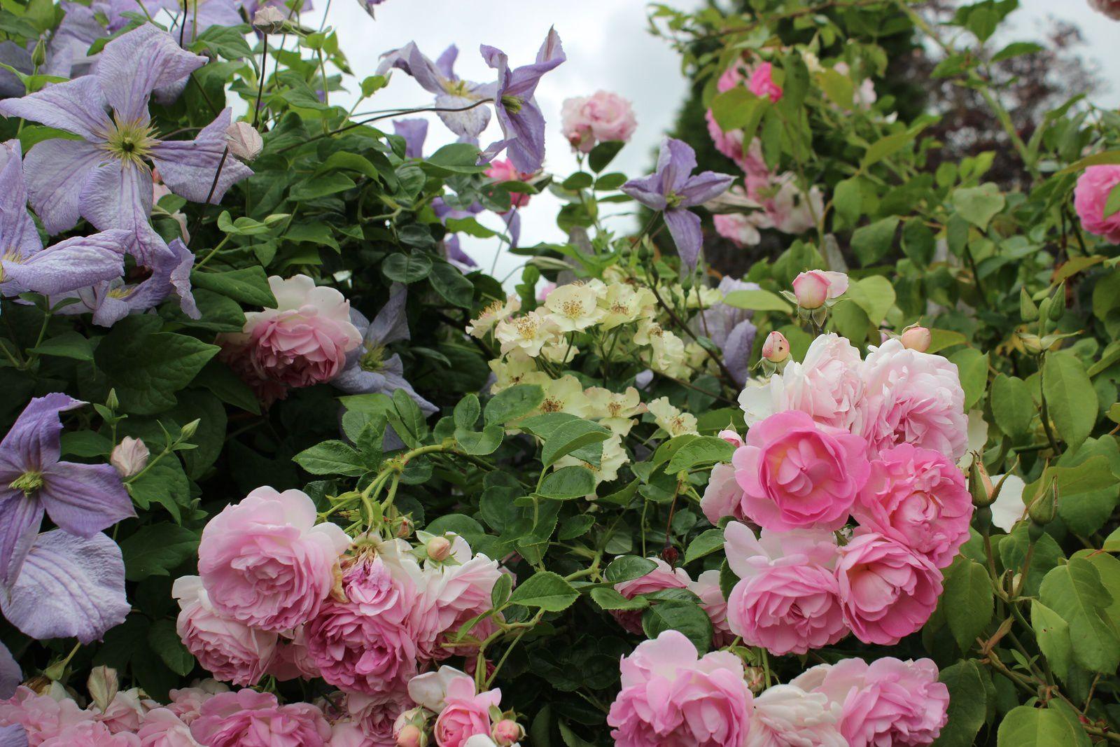 Portes ouvertes fils roses 2017