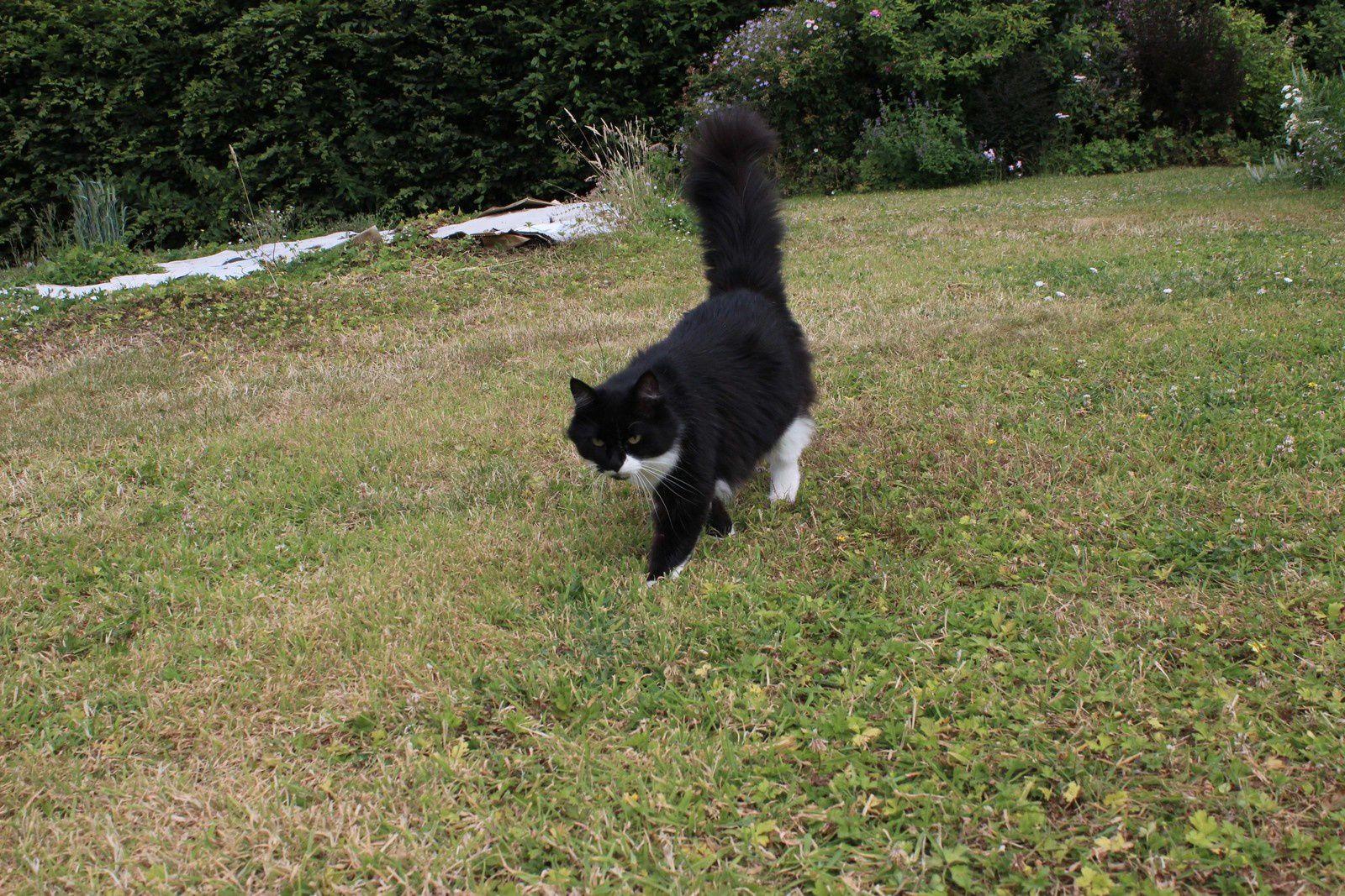 Sardine, la chatte qui a élu domicile chez nous depuis 18 mois.