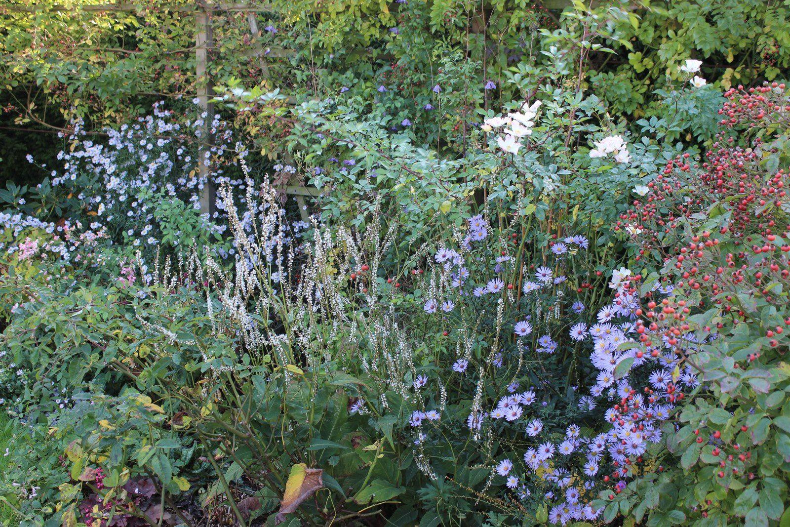 Octobre au jardin: la saison est sauvée....