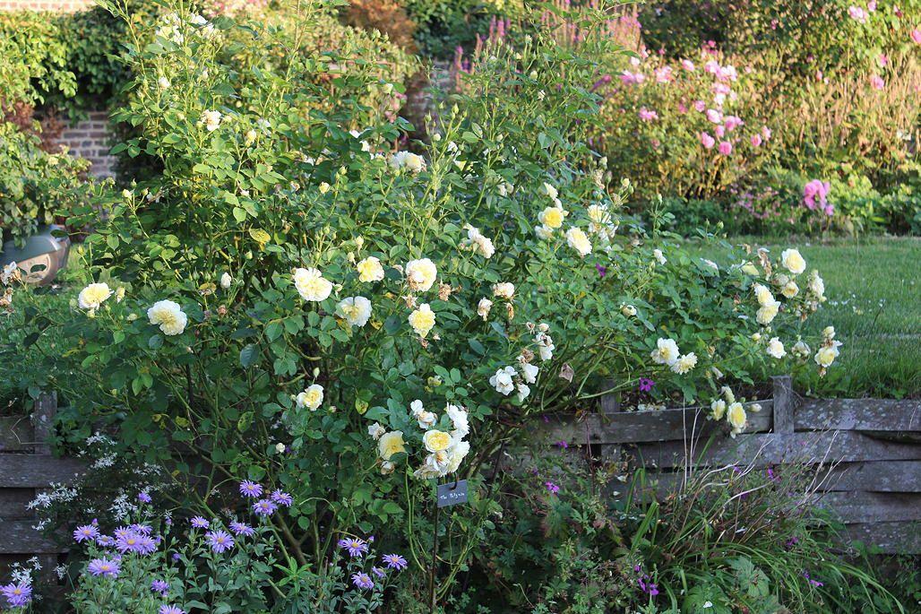 Le jardin fin août
