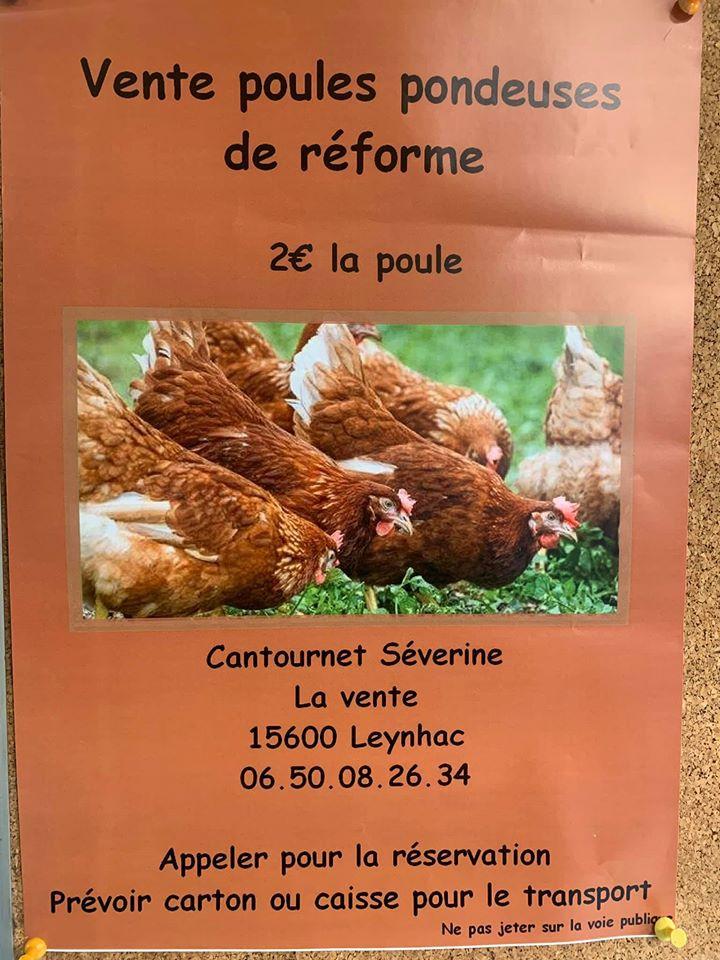 Vente poules pondeuses de réforme à Leynhac