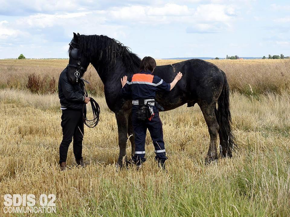 """Caillouel-Crepigny (02) - Un cheval du nom """"Arthos"""" ce retrouve dans le fossé"""