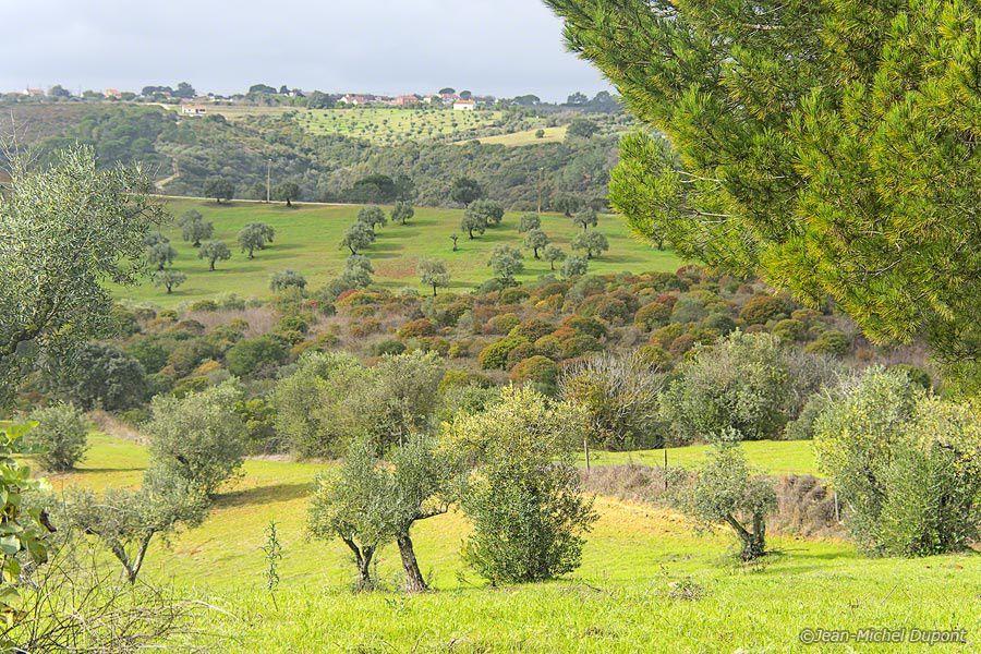 Paysages et plantes du Portugal