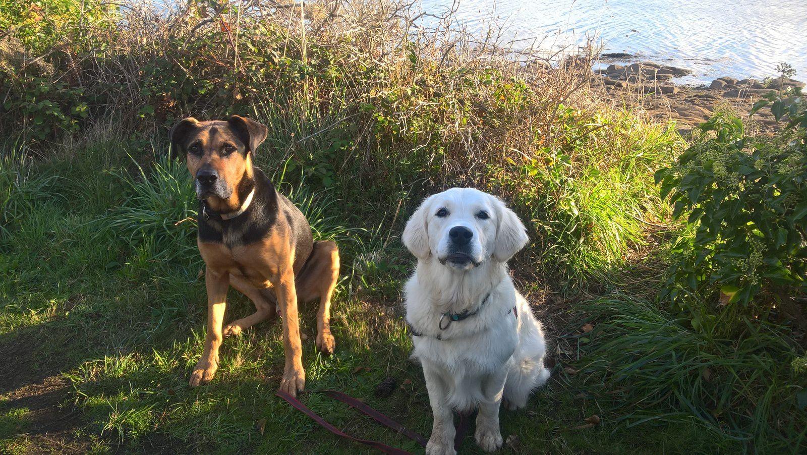 Quelques élèves de CynoZen-éducation canine.