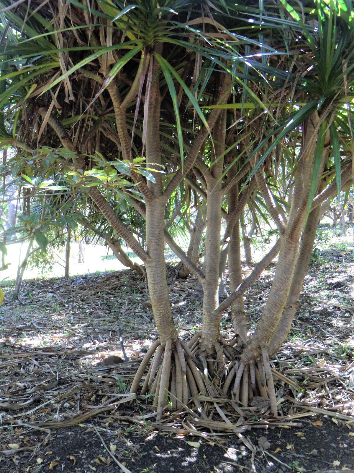 La Réunion et son Jardin Magique, (3)