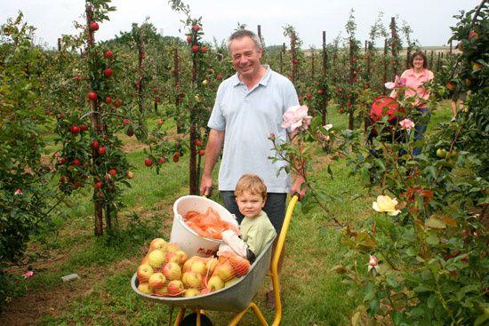 L'Association Nationale Pommes Poires accueillent les visiteurs au cœur de leur verger
