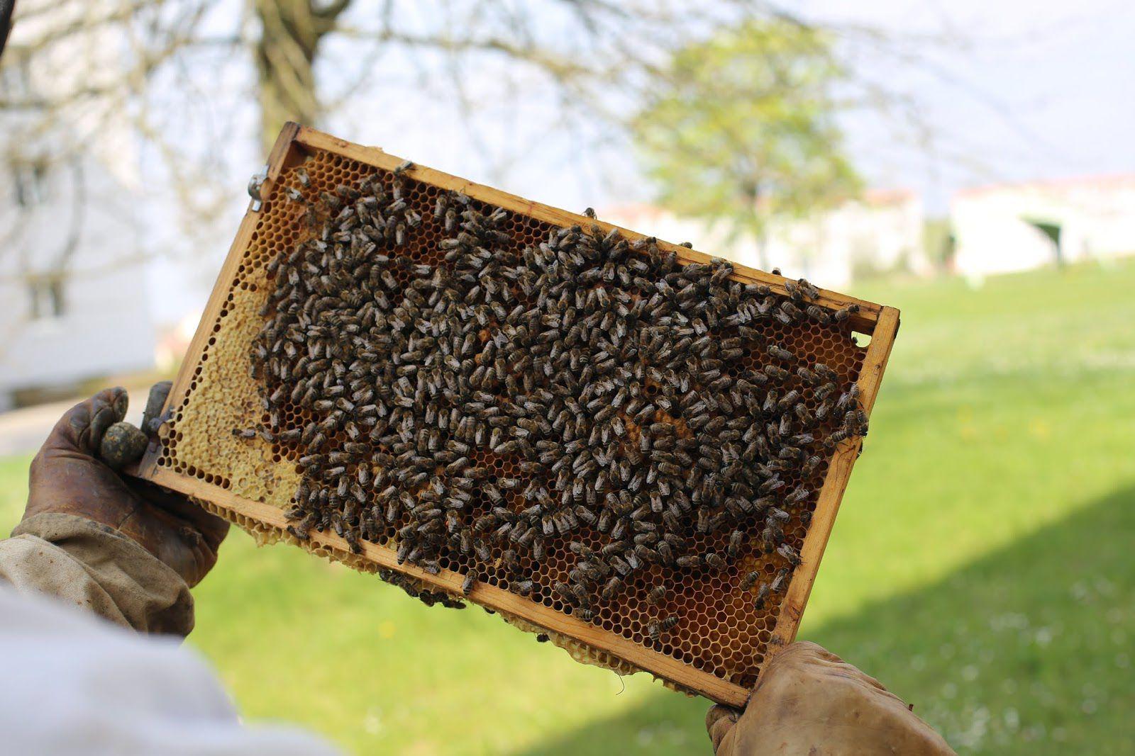 """Darbo : """"Signed by Bees"""" (miel """"en direct de la ruche"""") I Design : Demner Merlicek & Bergmann, Vienne, Autriche (décembre 2019)"""