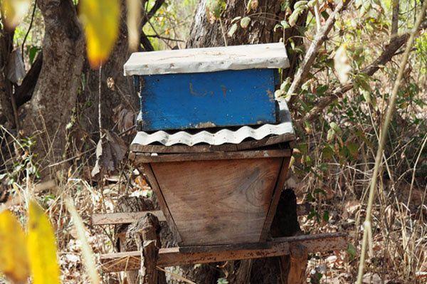 Une ruche kenyane surmontée d'une ruchette de capture.