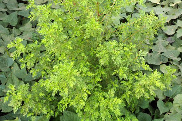Belles feuilles vertes
