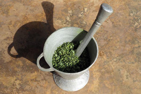 Comment faire... de la poudre de moringa