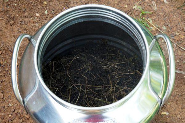 La même cuve après distillation, la masse végétale s'est bien tassée jusqu'à la moitié de la cuve