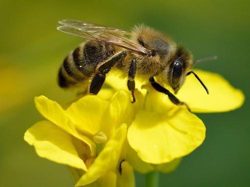 Le pollen, les haïkus d'Eliane