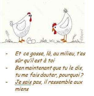 Histoires de poules
