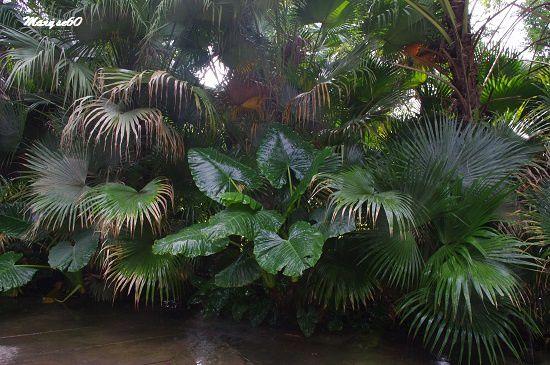 De la végétation luxuriante à profusion !