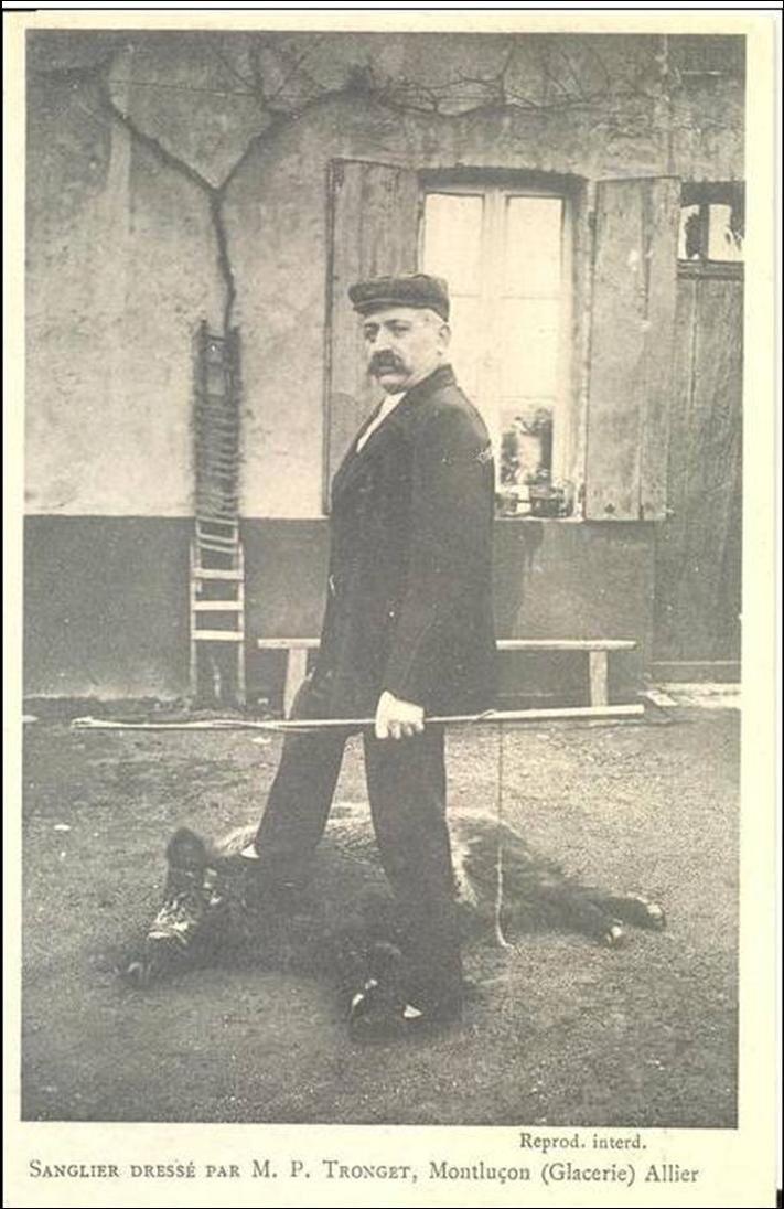 Insolite:Le dresseur de Sanglier à Montluçon