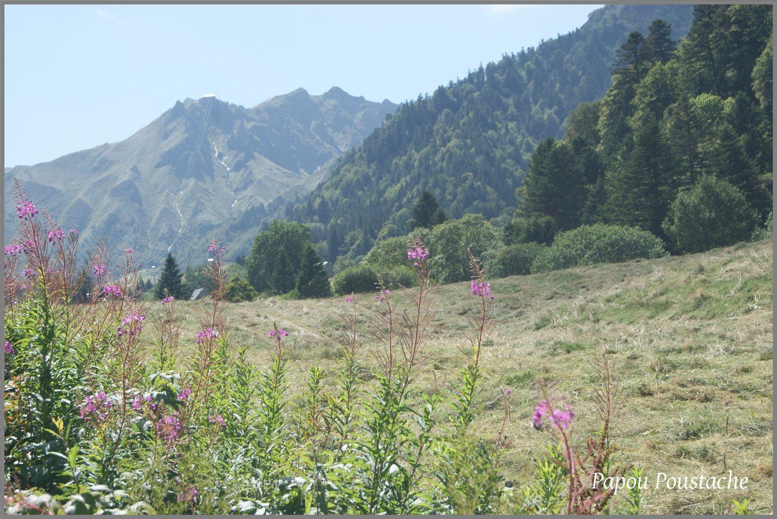 Auvergne:Les Monts Dore