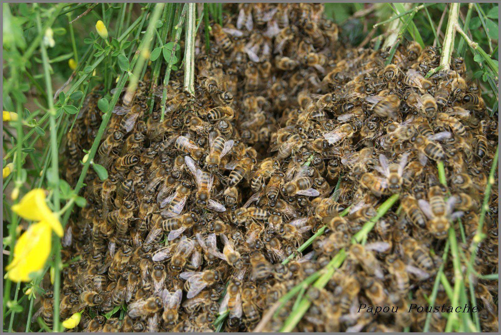 Un rucher en Auvergne