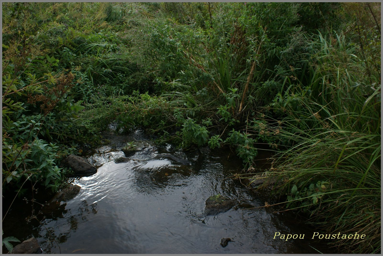 Randonnée des Bois de La pinatelle Chalinargues