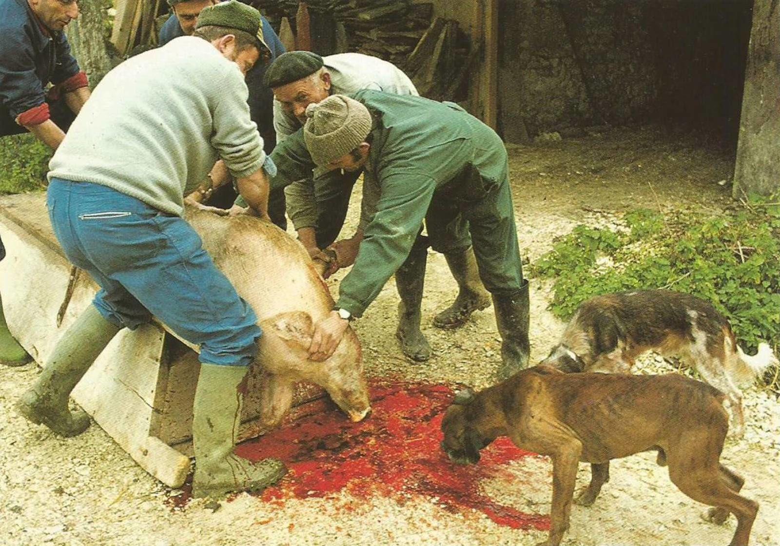 Auvergne des traditions: On tue le cochon