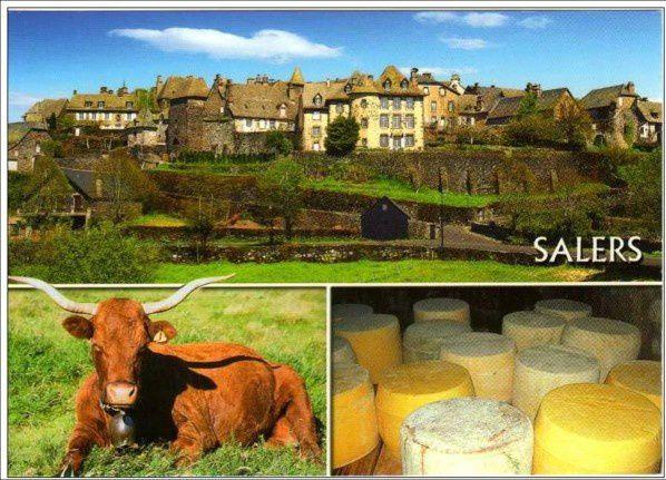 Les fromages d'Auvergne: Le Salers
