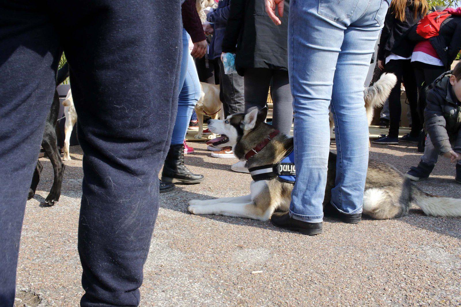 Wamiz Run : c'est votre chien qui vous sort !