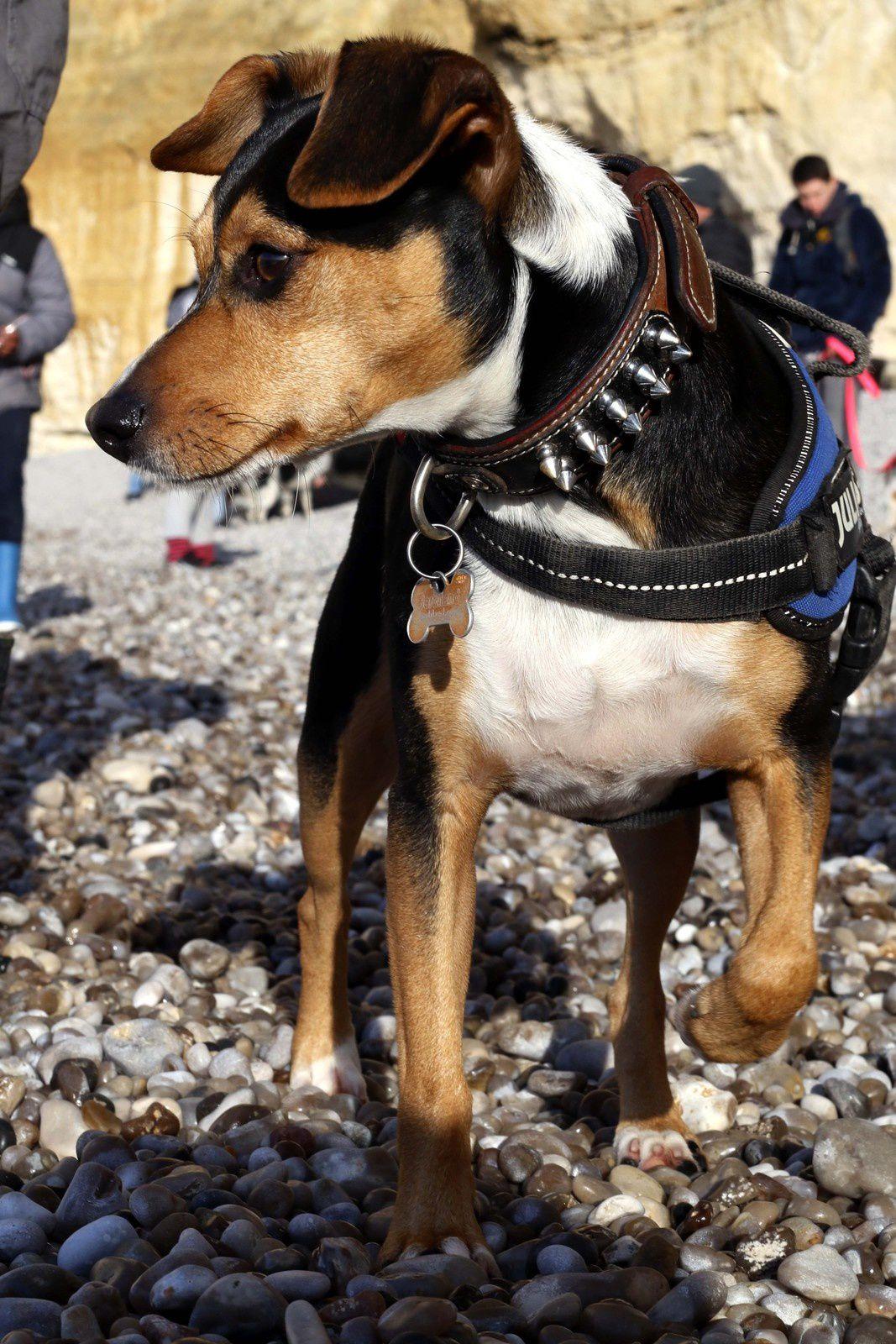 Une ballade canine au Tilleul