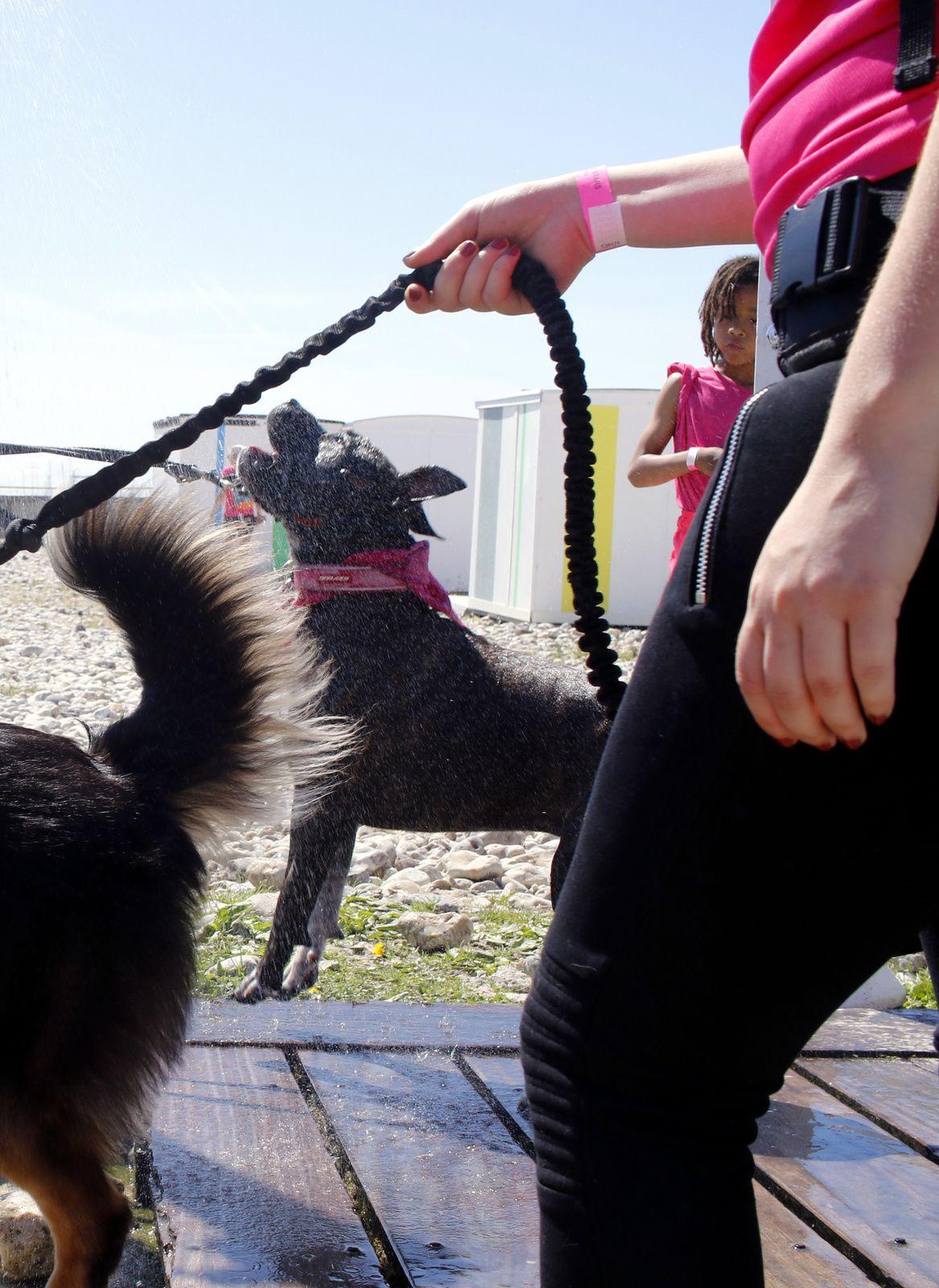 L'équipe canine pour l'Amazone
