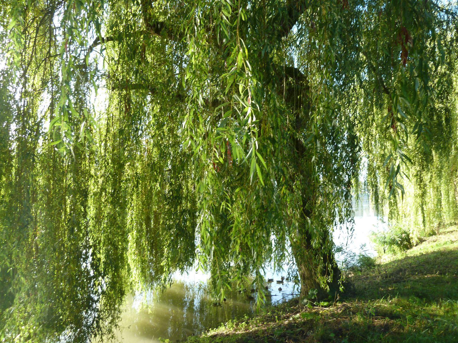 La magnifique promenade sur le bord de la Marne.