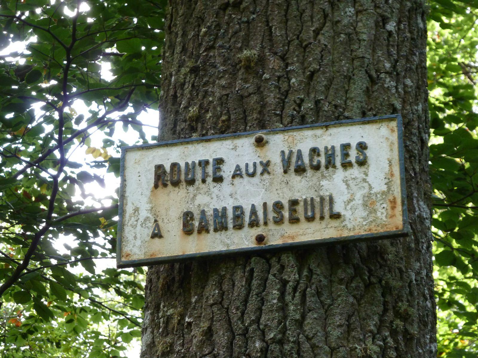 La Route aux Vaches à Gambaiseuil... Un joli champignon Amanite tue-mouches, beau mais pas bon..