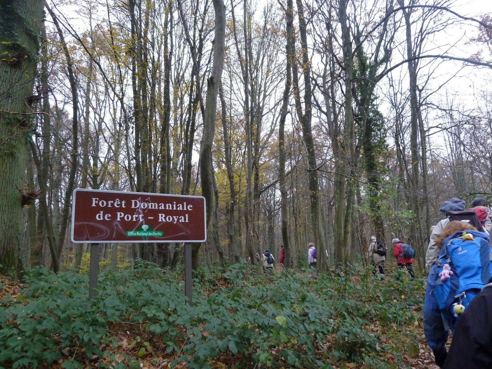 Tout près de la Ferme du Manet, nous atteignons la Forêt Domaniale de Port Royal.