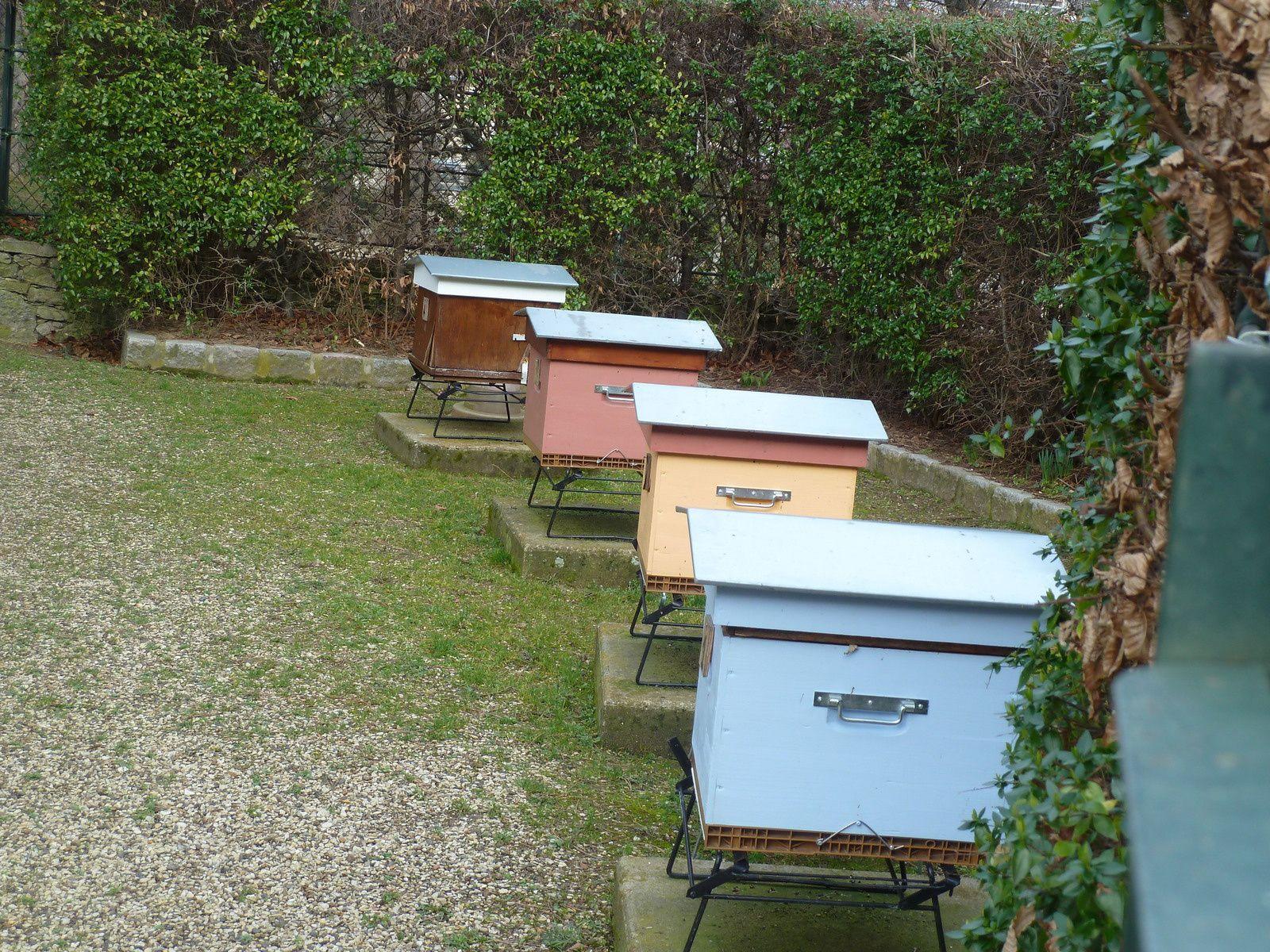 Comme dans beaucoup de jardins parisiens, des ruches sont installées, on dit que les abeilles parisiennes ont la chance de butiner des fleurs vierges de tous pesticides.
