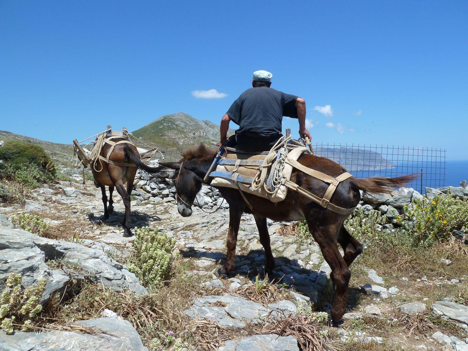 Avec les chèvres et cet homme à dos de mule, ce sont les seules rencontres de la journée...