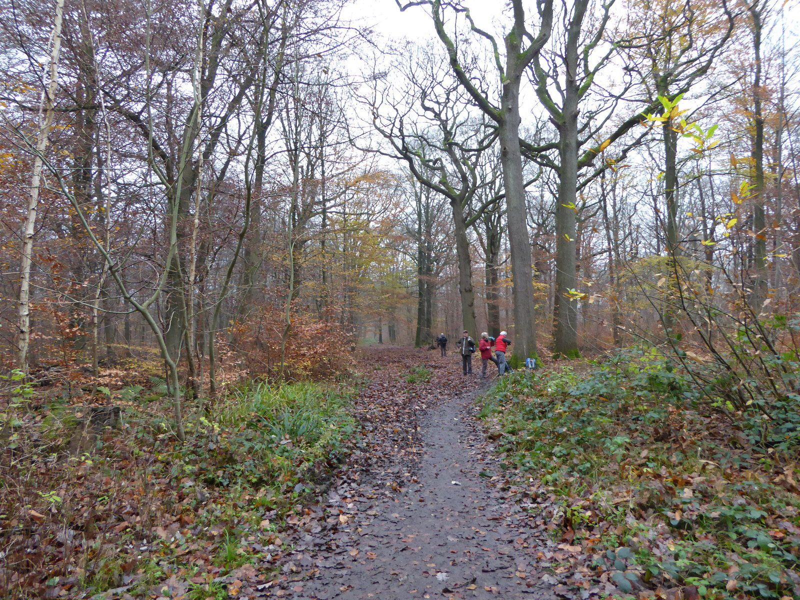 Nous filons dans la forêt de Marly par le GR1.