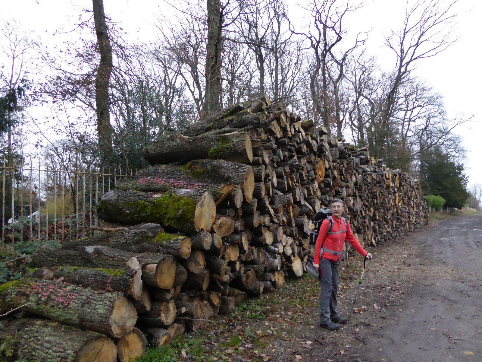 A l'Etoile du Lieutenant Aubert, les forestiers sont à l'oeuvre, des coupes de bois soigneusement rangées bordent le GR1. Notre amie Solange a été surprise....
