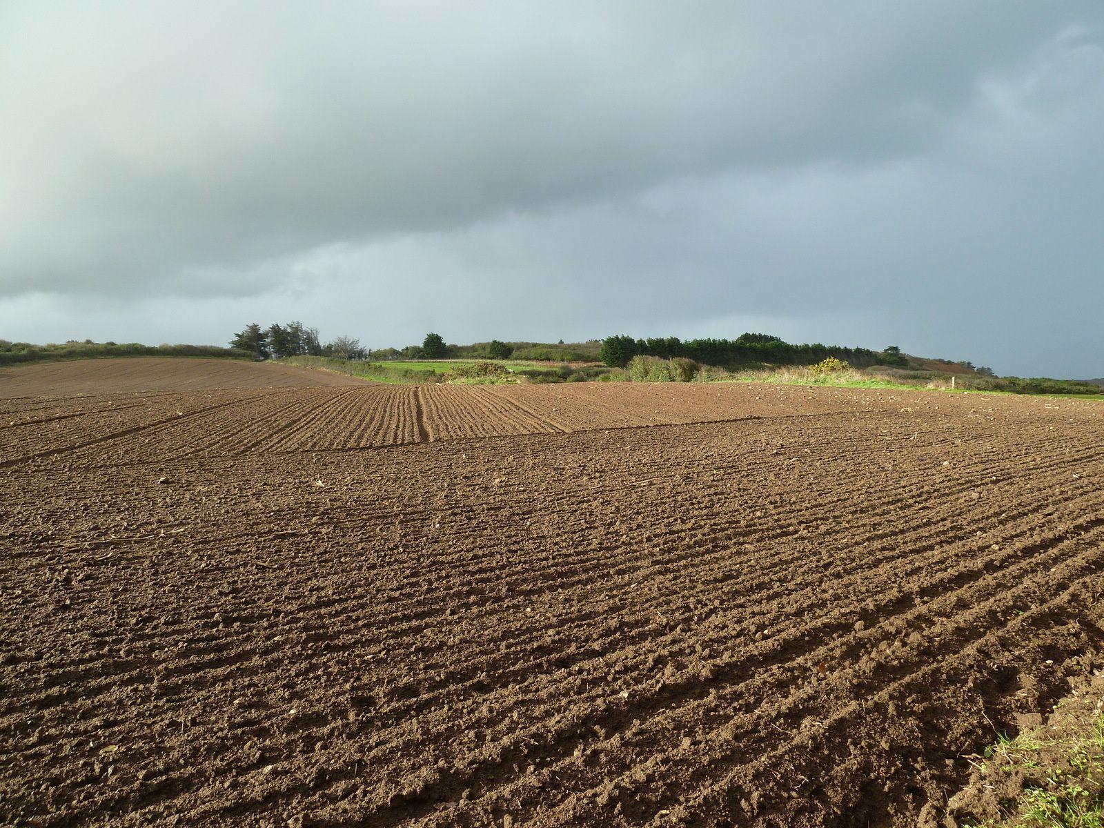 Après quelques dizaines de mètres, un grand champs fraichement labouré, ou ensemencé surmonté d'un ciel très perturbé.