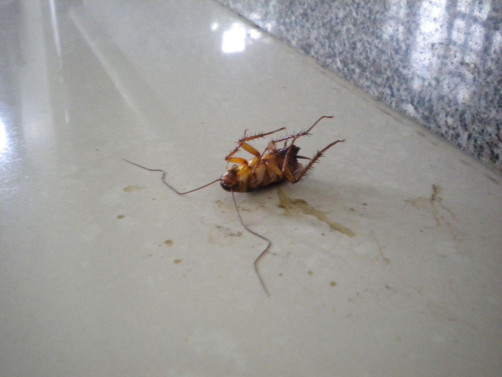 """Top 5+ des bestioles dans ma chambre: la """"faune"""" du Vietnam"""