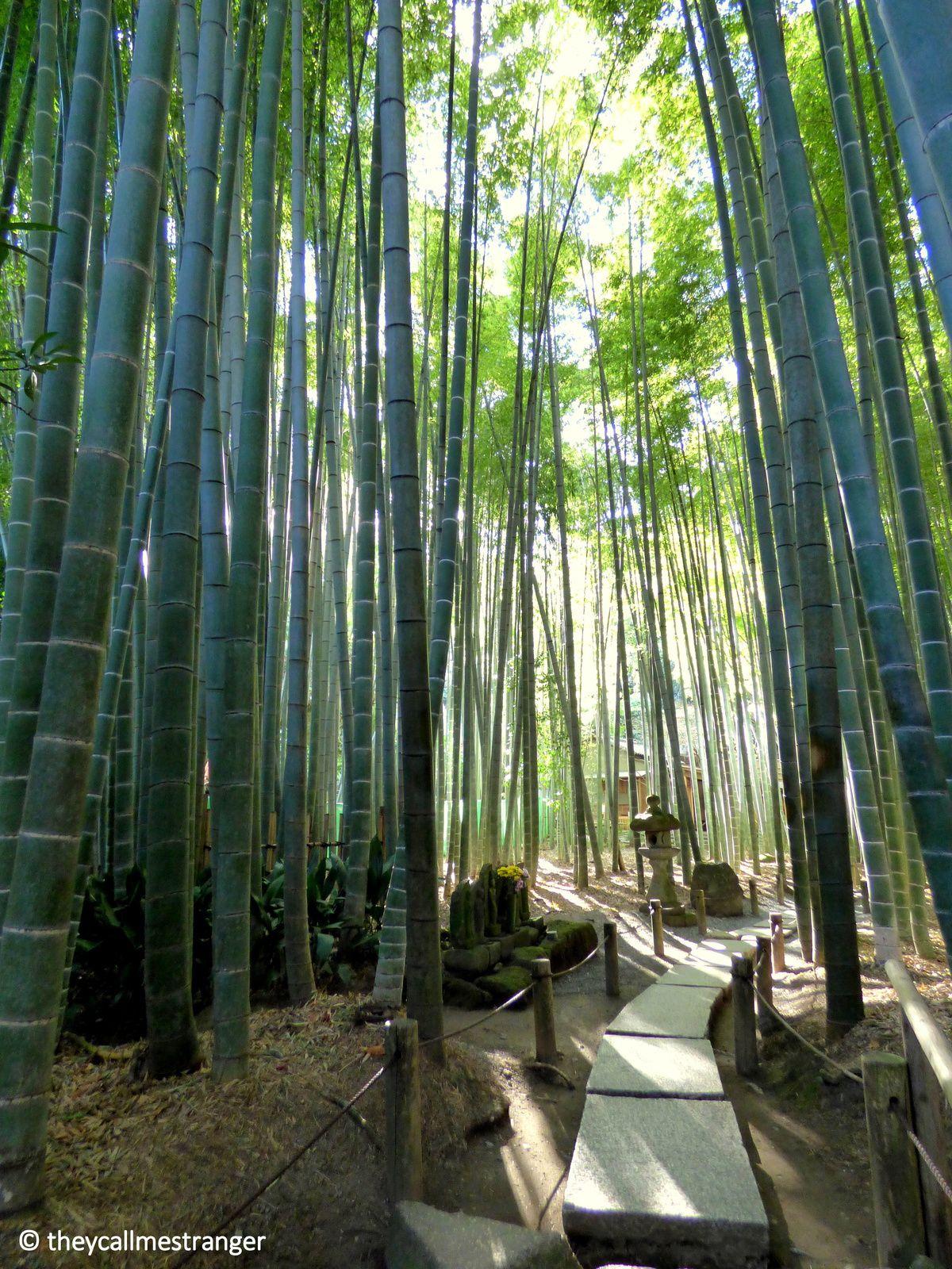 Le temple Hōkoku-ji et sa forêt de bambous, Kamakura