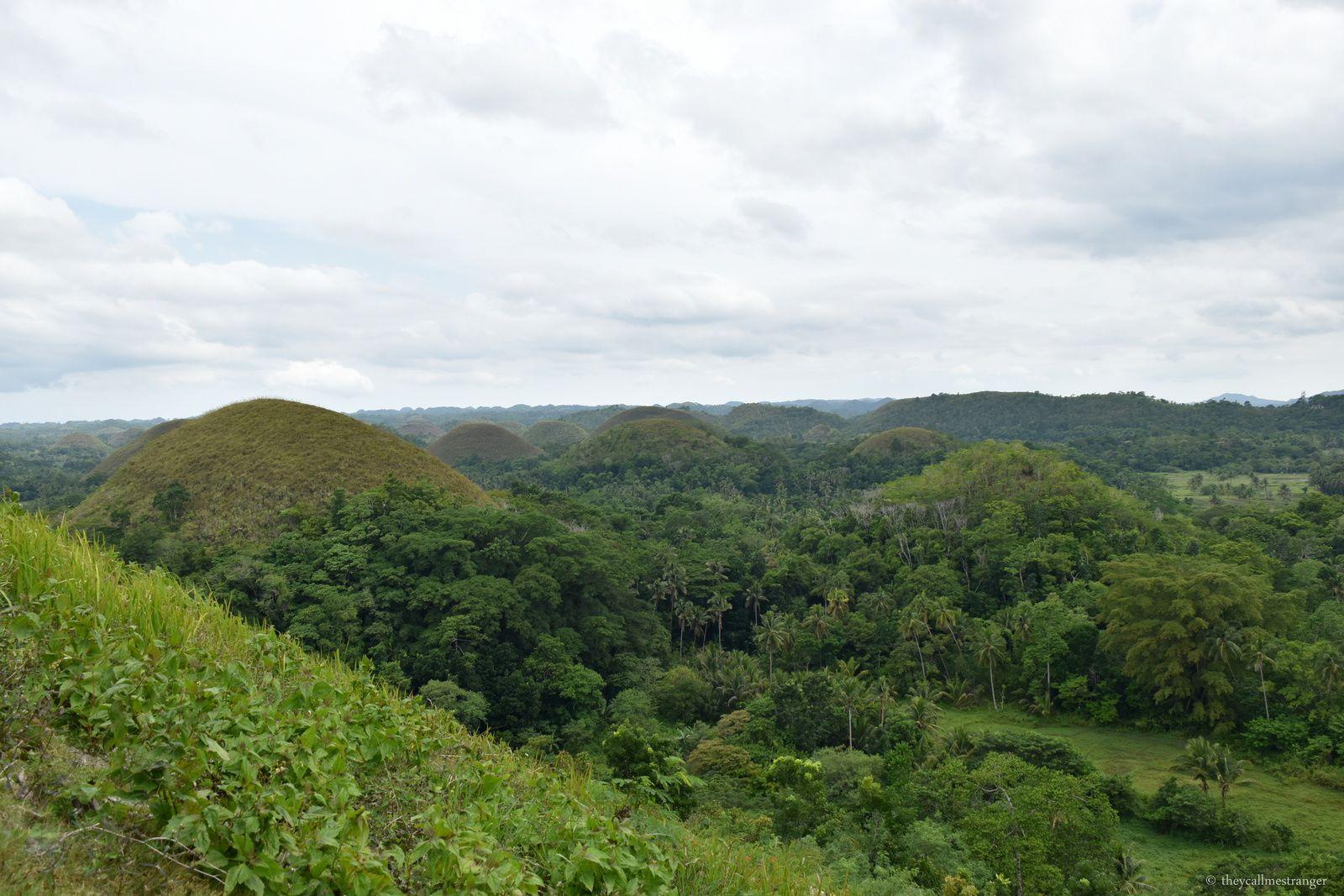 L'île de Bohol : tarsiers et Chocolate Hills