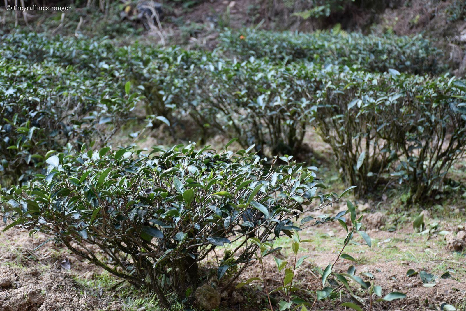 Le parc national de Wuyishan 武夷山