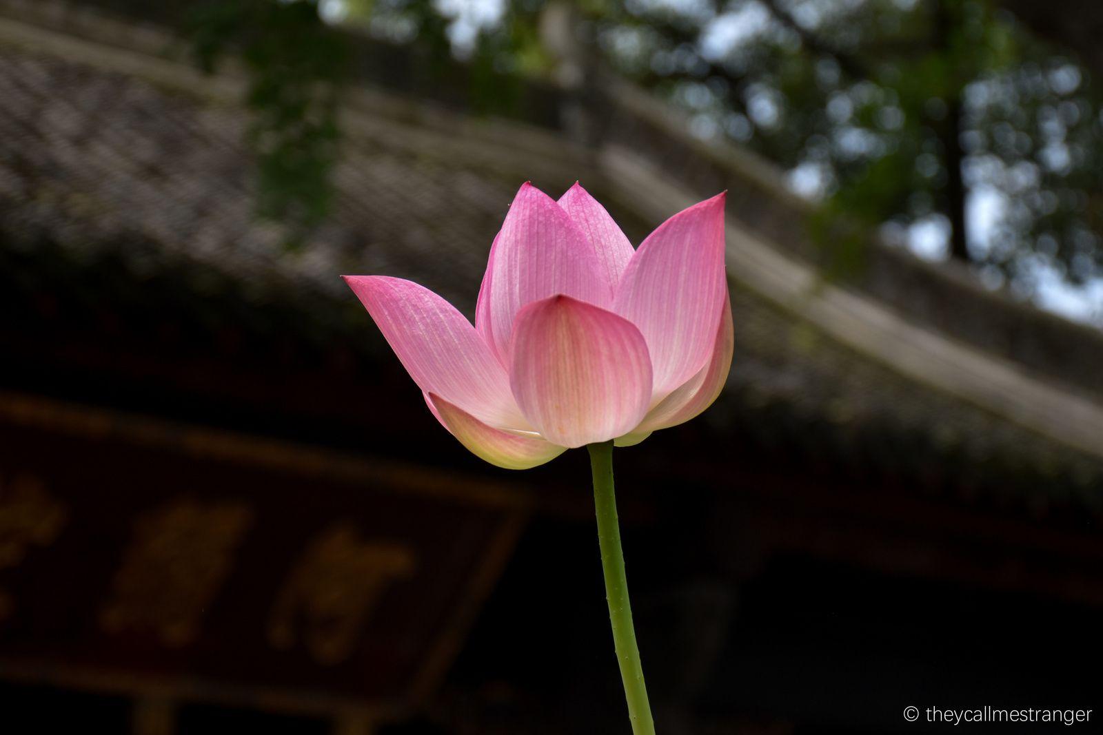 Chengdu 成都 : Le monastère bouddhiste Wenshu 文殊院