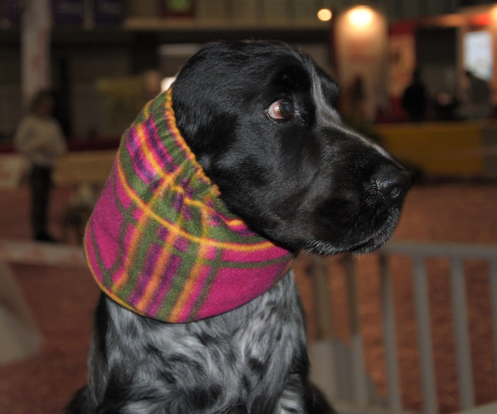 SNOODS POLAIRES