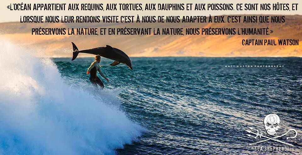 https://www.facebook.com/SeaShepherdFrance/photos/a.231264606929028.57605.185859018136254/811195178935965/?type=1&permPage=1