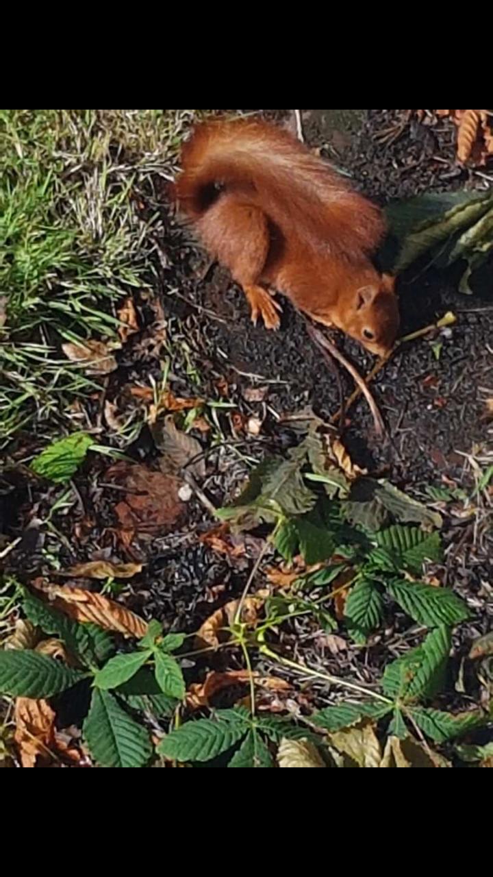 Un écureuil pris sur le vif ...