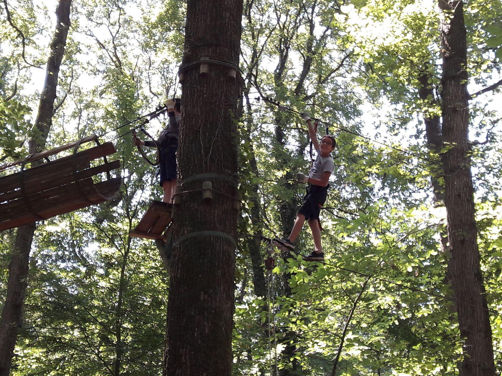 Les CM2 à la cime des arbres