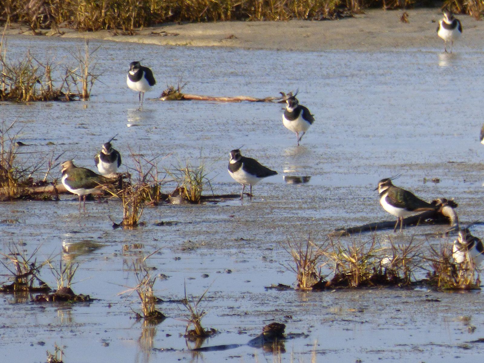 Réserve ornithologique de Goulven