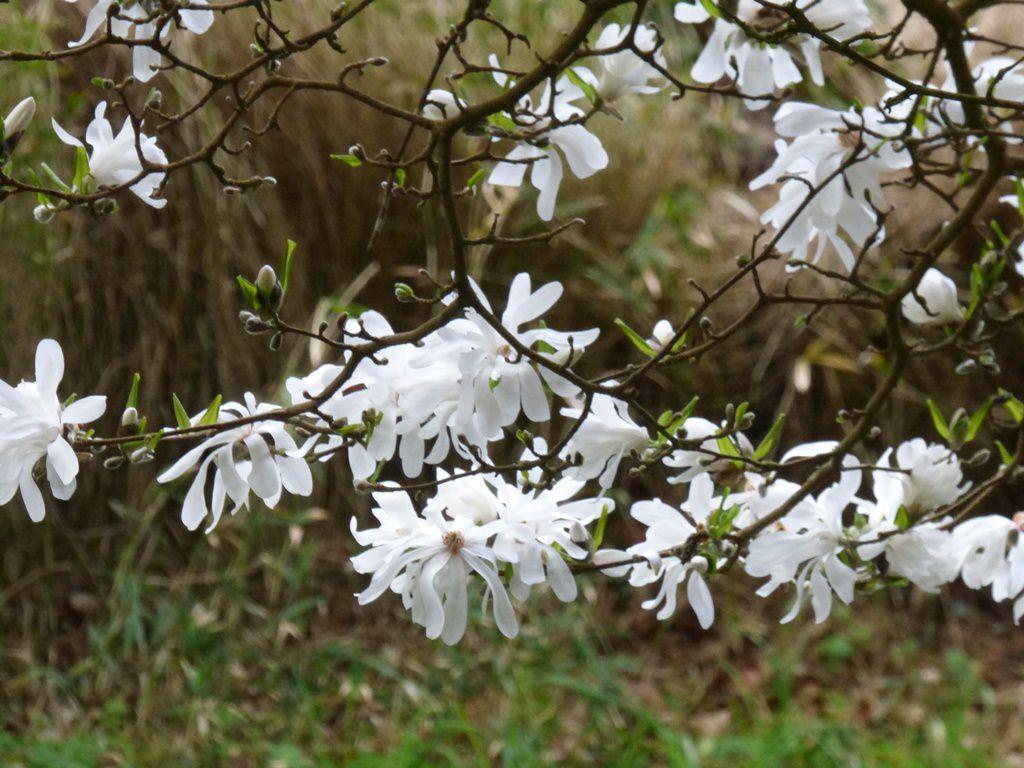 Au printemps tu reverras la bergeronnette des ruisseaux....