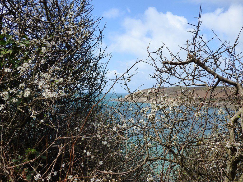 Entre la plage de Kerhomou et Illien