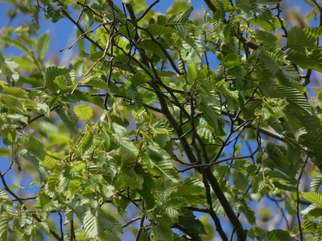 qui arborent toutes les nuances de vert contrastant avec le bleu du ciel de ce 1er mai.