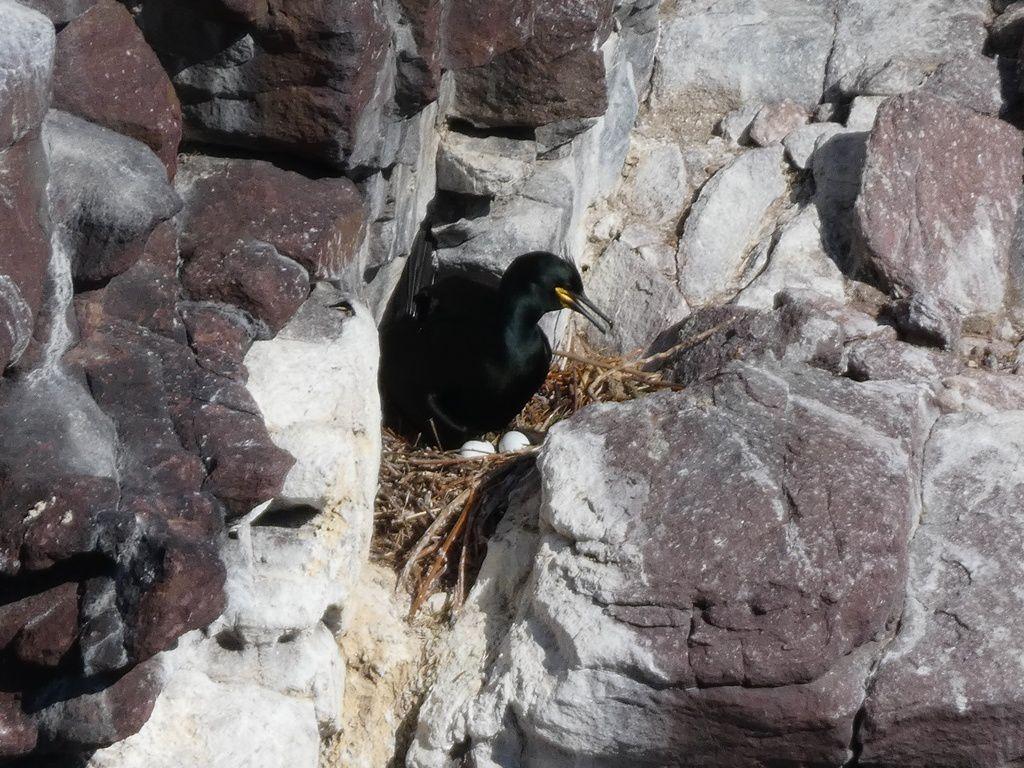 L'observatoire des oiseaux au Cap Fréhel